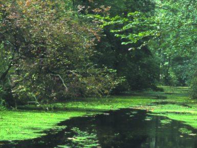 Schutz von sechs gefährdeten Tierarten im Ramsargebiet Rhin supérieur/Oberrhein