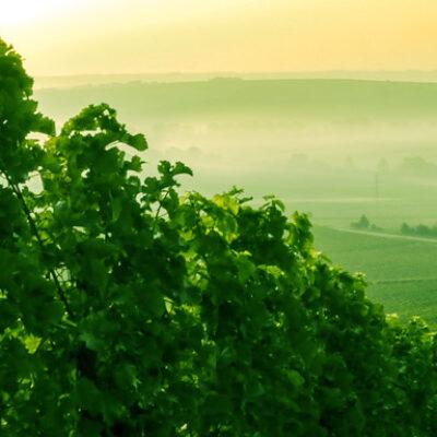 DialogProTec: Technologie im nachhaltigen Pflanzenschutz