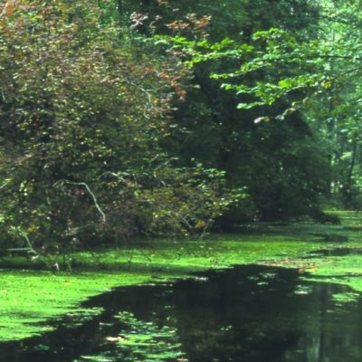 Waldentwicklung natürlicher Buchenwälder im grenzüberschreitenden Biosphärenreservat Pfälzerwald / Nordvogesen