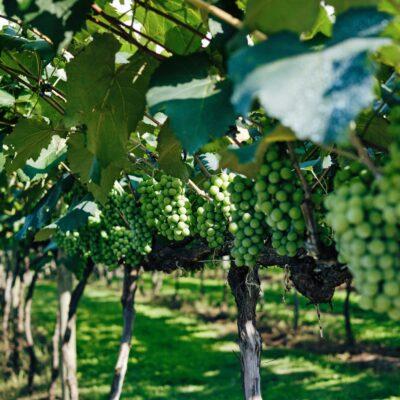 Deutsch-Französischer Master Viticulture & Oenologie FAVO